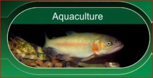 Rangen Aquaculture Feeds